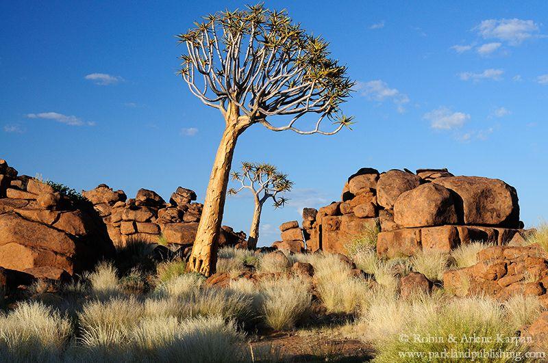 giant's playground, quiver tree