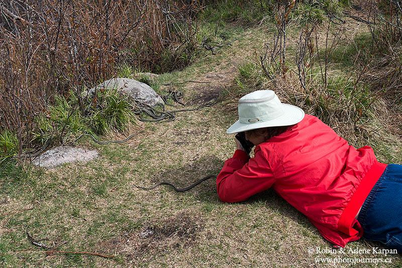 photographing garter snakes, Fort Livingstone