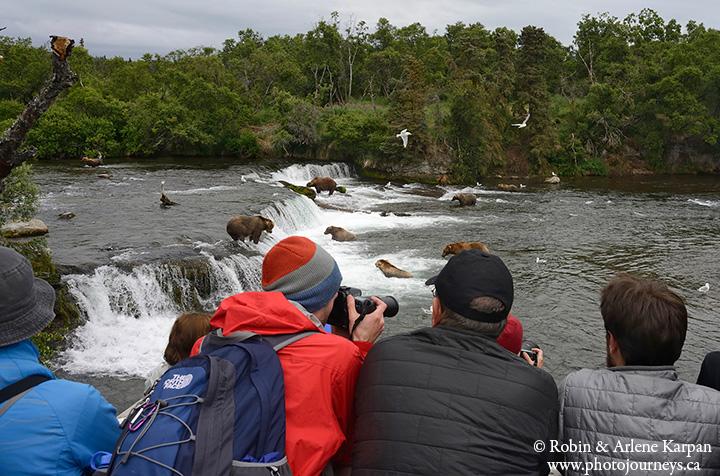 Brown bears, Brooks River