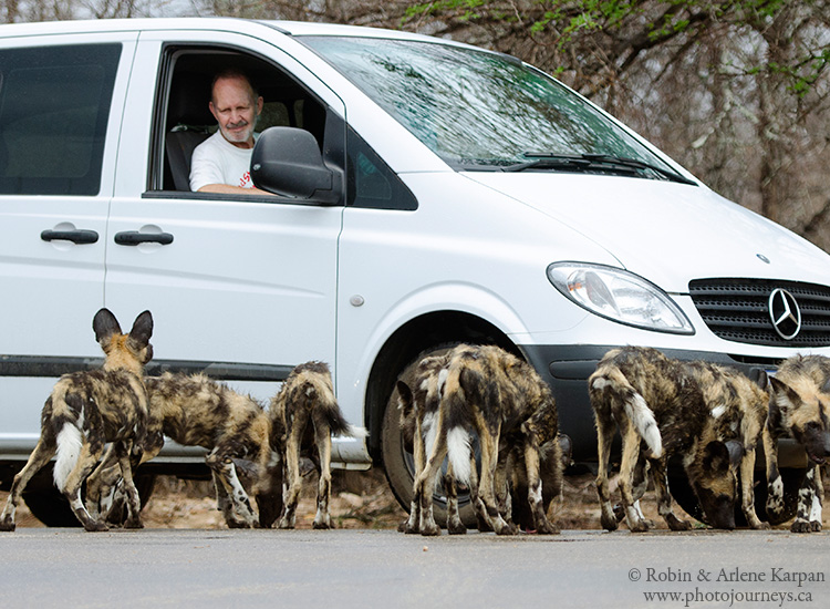 wild dogs, Kruger National Park