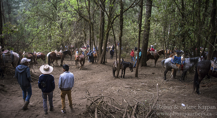 Horse parking lot, Piedra Herrada Monarch Butterfly Reserve, Mexico