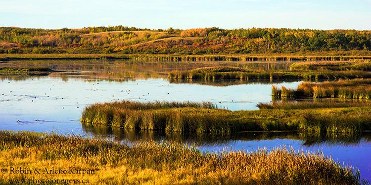 Wetland near Scent Grass Bird Sanctuary, Thickwood Hills