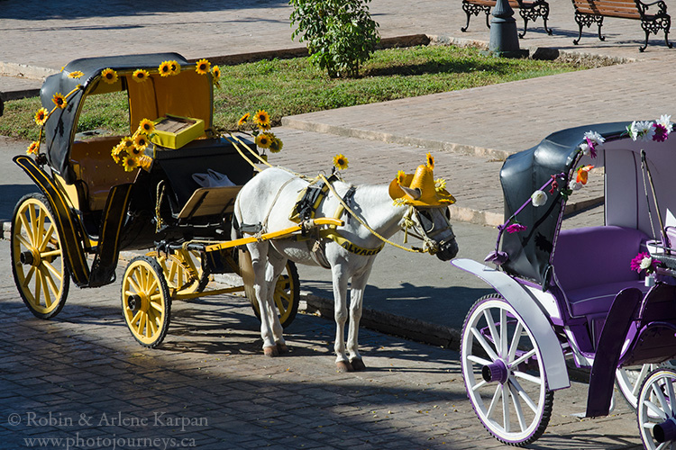 Horse-drawn carriages, Izamal
