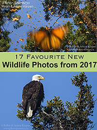 2017 wildlife photos