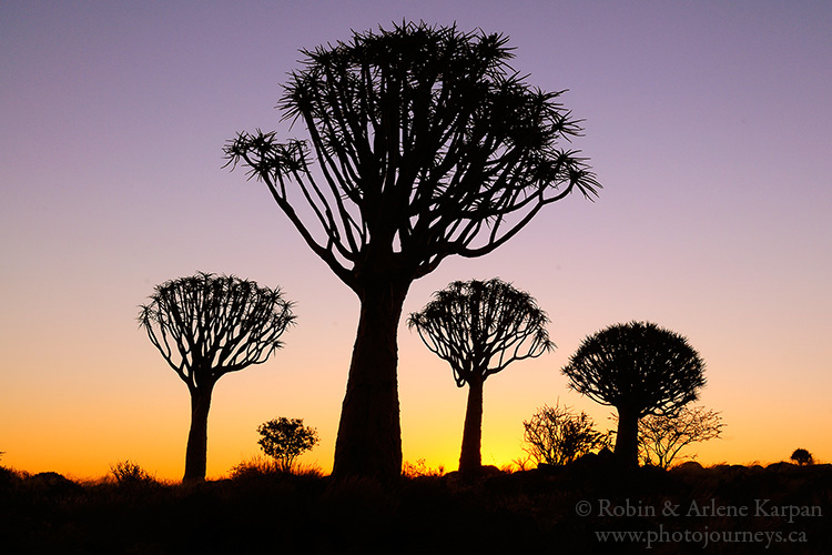Quiver trees, Namibia