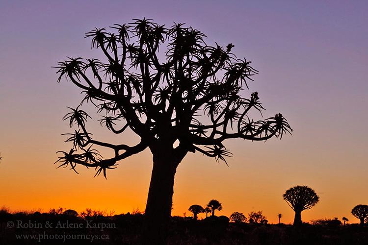 Quiver tree, Namibia