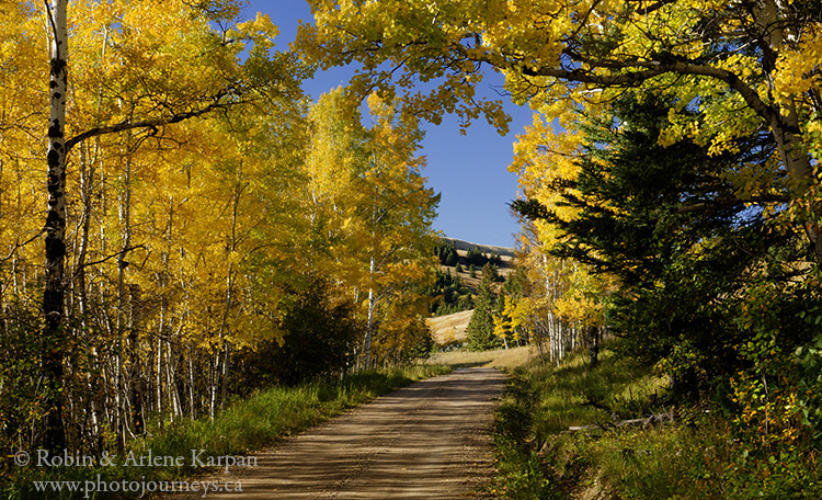 Fall along the Battle Creek Road, Cypress Hills, SK