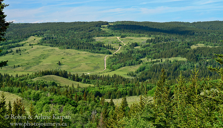 Battle Creek Valley, Cypress Hills, SK